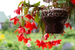 Beautiful decorative red flowers Stock Image
