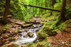 Beautiful deep green forest with river running through. In the Carpathians Royalty Free Stock Photo