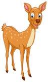 Beautiful Deer Stock Photography