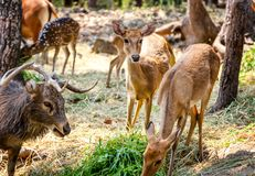 Beautiful deer eating grass in the green park Royalty Free Stock Photos