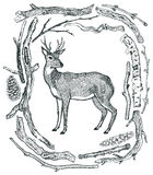 Beautiful Deer Frame of Driftwood Wild wild woods Sketch style H Stock Photos
