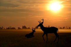 Beautiful deer. Royalty Free Stock Images