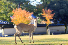 Beautiful deer with nice sky Stock Photos