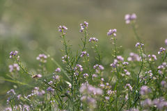 Beautiful defocus blur background with tender flowers. Royalty Free Stock Photography