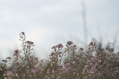 Beautiful defocus blur background with tender flowers. Floral art design in retro style Stock Photography