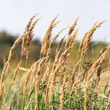 Beautiful defocus blur background with tender flowers. Royalty Free Stock Image