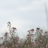Beautiful defocus blur background with tender flowers. Stock Image