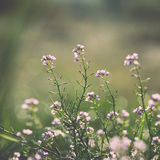 Beautiful defocus blur background with tender flowers. Floral art design in retro style. Vintage effect Stock Photos