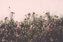 Beautiful defocus blur background with tender flowers. Floral art design in retro style. Vintage effect Stock Images