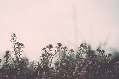 Beautiful defocus blur background with tender flowers Royalty Free Stock Photo