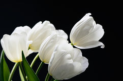 Free Beautiful Delicate Bouquet Of A White Tulips On A Dark Background. Horizontal, Space For Text Stock Images - 72749354