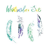 Beautiful delicate feathers painted in watercolor.  Stock Photos