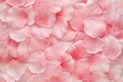 Beautiful delicate pink rose petals Stock Images