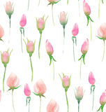 Beautiful delicate tender cute elegant lovely floral colorful spring summer pink roses buds and leaves bouquet. Watercolor hand illustration Stock Photos