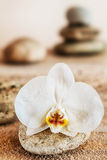 Beautiful delicate white orchid on a seashore Royalty Free Stock Image