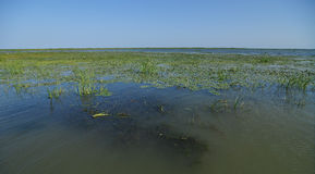 Delta of Danube landscape Stock Image