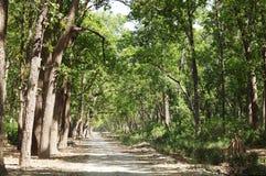 Beautiful dense forest along the dirt road of Jim Corbett Stock Image