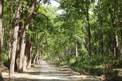 Beautiful dense forest along the dirt road of Jim Corbett Royalty Free Stock Images