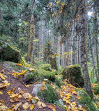 Beautiful dense forest Royalty Free Stock Photo