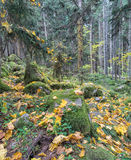 Beautiful dense forest Stock Photos