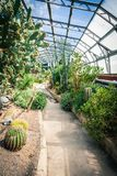 Exotic succulent plants in the greenhouse Royalty Free Stock Image
