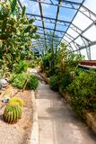 Exotic succulent plants in the greenhouse Stock Photos