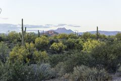 Beautiful Desert Foliage Near Superstition Mountains, Apache Junction Arizona royalty free stock photos