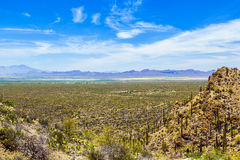 Beautiful desert landscape with cacti Stock Photography