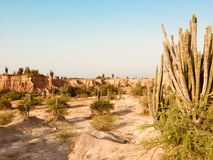 Beautiful desert landscape with red rock mountain and cactus plants royalty free stock images