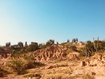 Beautiful desert landscape with red rock mountain and cactus plants. Beautiful desert landscape with red rock mountain and cactus stock photo