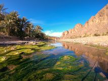 Free Beautiful Desert Oasis Landscape In Oasis De Fint Near Ourzazate In Morocco, North Africa Royalty Free Stock Images - 142138269
