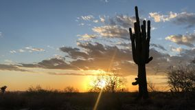 Beautiful desert sunset timelapse with movement. Saguaro cactus in foreground, Scottsdale, Arizona, USA stock footage