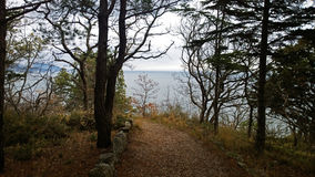 Beautiful desert trail in the woods leading to the sea. A lot of trees, branches and stones stock photos