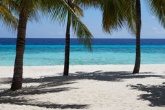 Beautiful Deserted Tropical Palm Beach In Maldives Stock Image