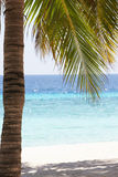 Beautiful Deserted Tropical Palm Beach In Maldives Royalty Free Stock Photography