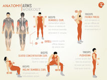Beautiful design info graphic of arm workoutbiceps Stock Image