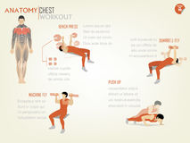 Beautiful design infographic of chest workout consist Stock Photo