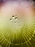 Beautiful detail of the cobwebs royalty free stock photo