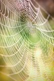 Beautiful detail of the cobwebs Royalty Free Stock Photos