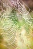 Beautiful detail of the cobwebs royalty free stock photos