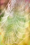 Beautiful detail of the cobwebs Royalty Free Stock Photo