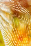 Beautiful detail of the cobwebs stock photography