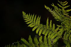 Beautiful detail landscape image of fern in forest lit by sun ag stock image