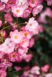Beautiful detail of scented botanical garden flowers stock photography