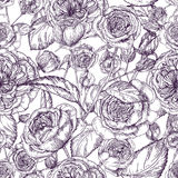 Beautiful detailed pion-shaped rose seamless pattern. Hand drawn blossom flowers and leaves. Black and white vintage Royalty Free Stock Photography
