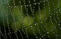 Beautiful dewdrops on a spider line stock image