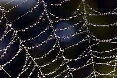 Beautiful dewdrops on a spider line Stock Photos