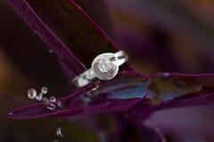Beautiful diamond ring Royalty Free Stock Images