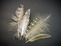 Beautiful different birds feathers on black background Stock Image