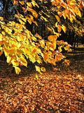 Path  and colorful autumn trees, Lithuania Royalty Free Stock Photos